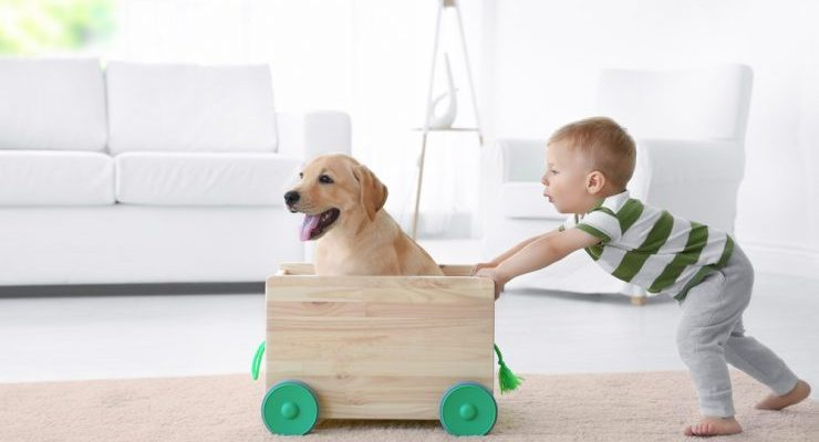 mascotas y calidad de vida